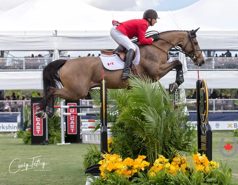 Un cavalier en action sur son cheval