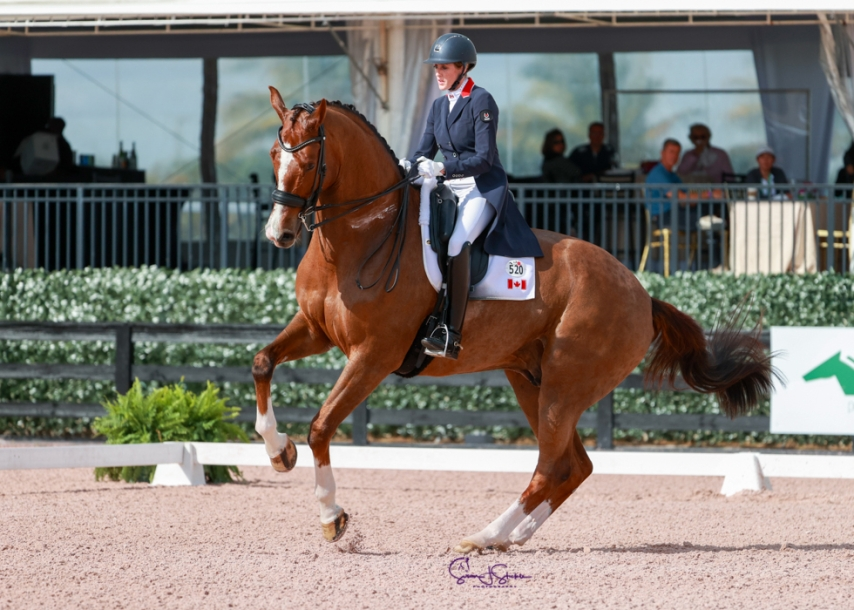Une cavalière sur son cheval en action