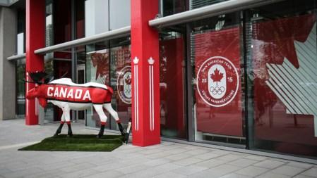 L'orignal canadien en liberté (photo: Alexa Fernando)